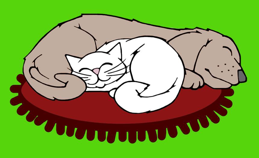 Raschelkissen für Katz und Hund