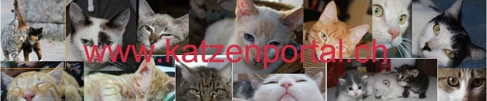 Katzenportal